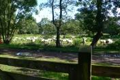Orvelte - Hier zijn de schapen